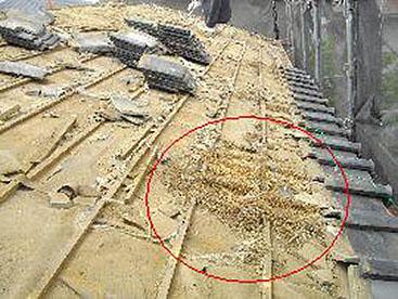 巣や土をきれいに取り除き、掃除